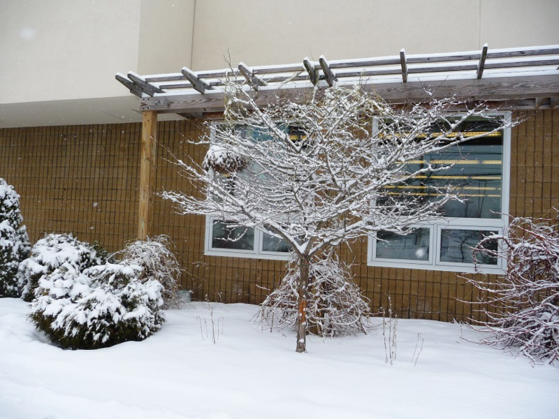 snowy library 2 (800x600)